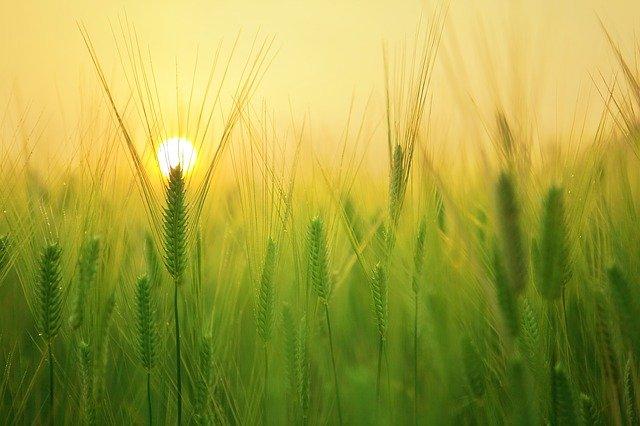 Was ist Landwirtschaft und traditionelle Landwirtschaft?