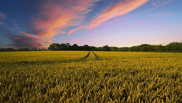 Auswirkungen der landwirtschaftlichen Praxis