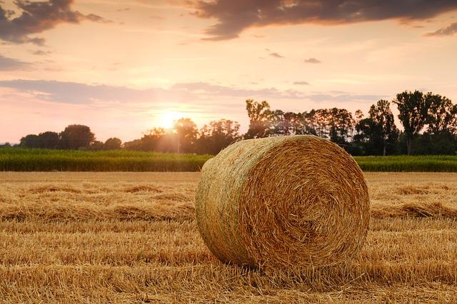 Die profitabelsten Geschäftsideen in der Landwirtschaft