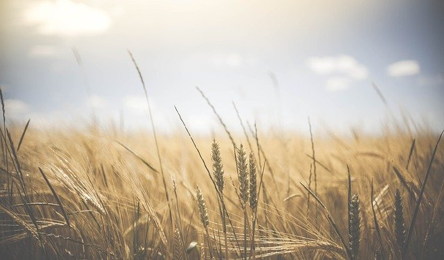 Hauptauswirkungen der Landwirtschaft auf die Umwelt